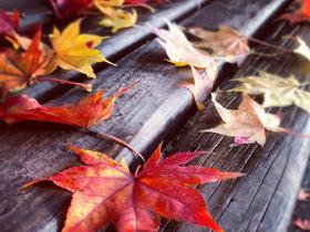 秋季红叶拍摄技巧